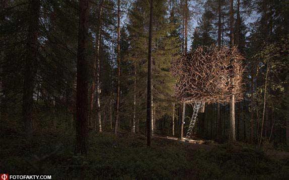 Отель на дереве фото 8
