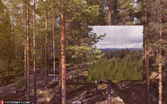 Отель на дереве фото 11