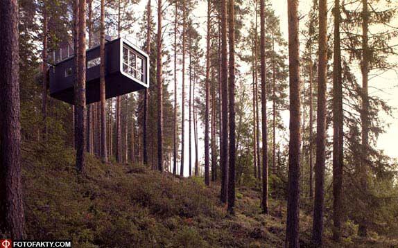 Отель на дереве фото 16