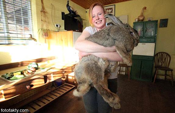 Ральф - самый большой кролик в мире Фото 1