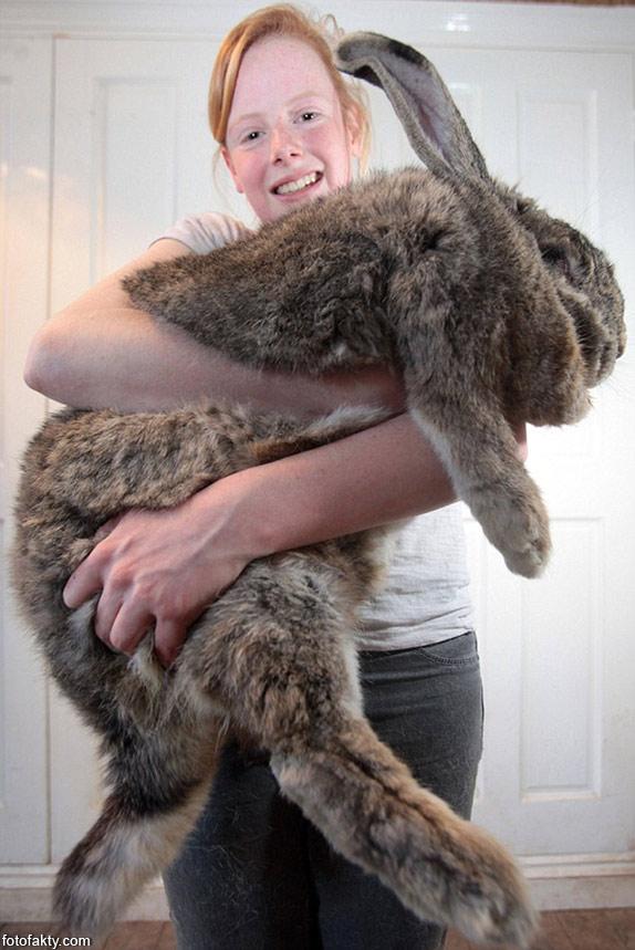 Ральф - самый большой кролик в мире Фото 2