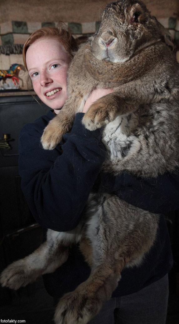 Ральф - самый большой кролик в мире Фото 3