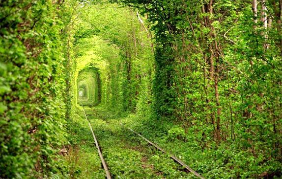 Самые красивые туннели из деревьев