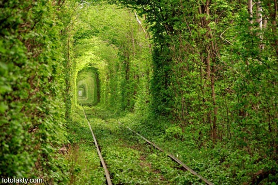 Самые красивые туннели из деревьев Фото 4