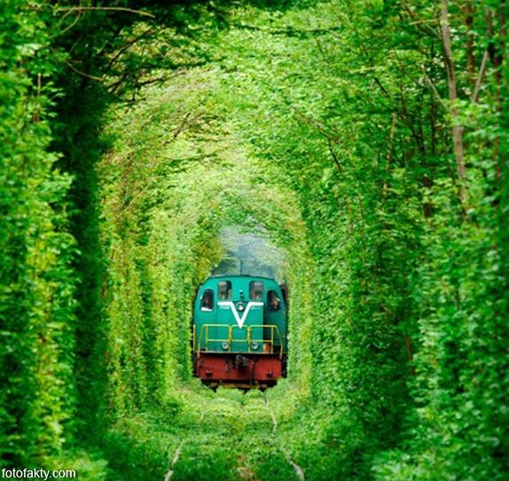 Самые красивые туннели из деревьев Фото 5