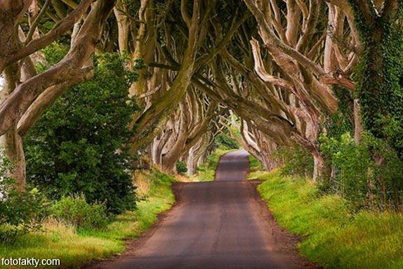 Самые красивые туннели из деревьев Фото 11