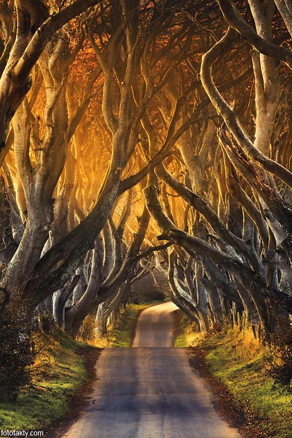 Самые красивые туннели из деревьев Фото 12