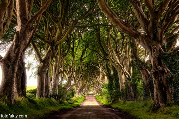 Самые красивые туннели из деревьев Фото 13