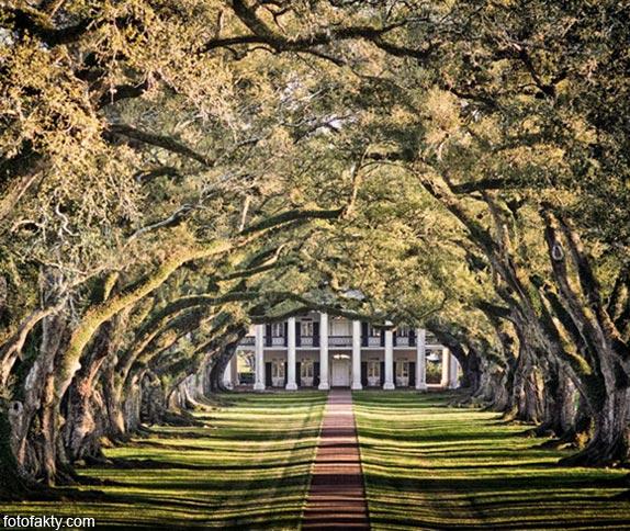 Самые красивые туннели из деревьев Фото 23