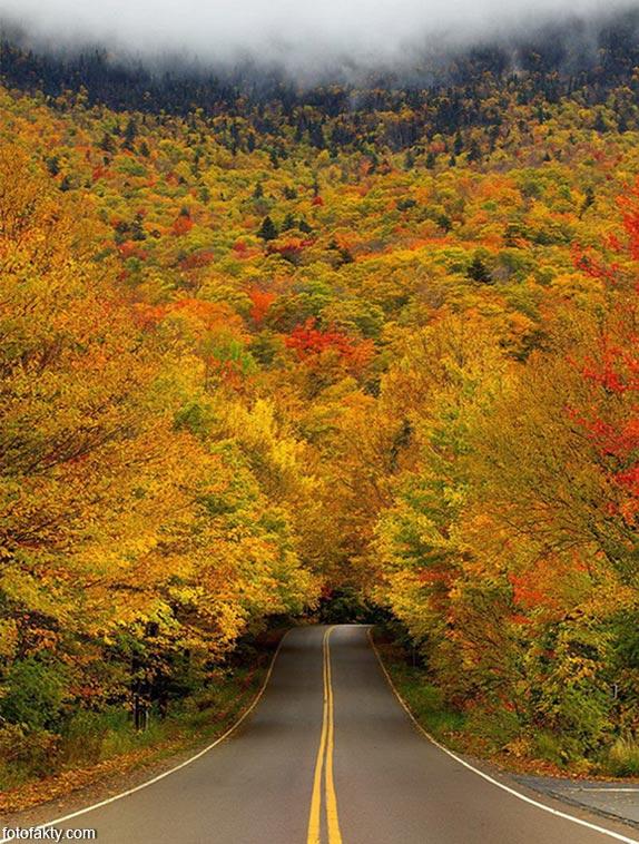 Самые красивые туннели из деревьев Фото 9