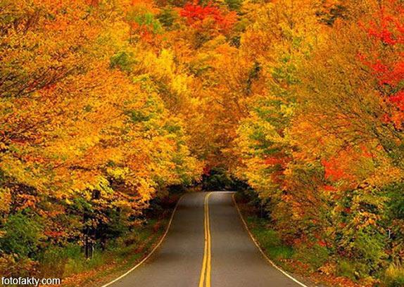 Самые красивые туннели из деревьев Фото 10