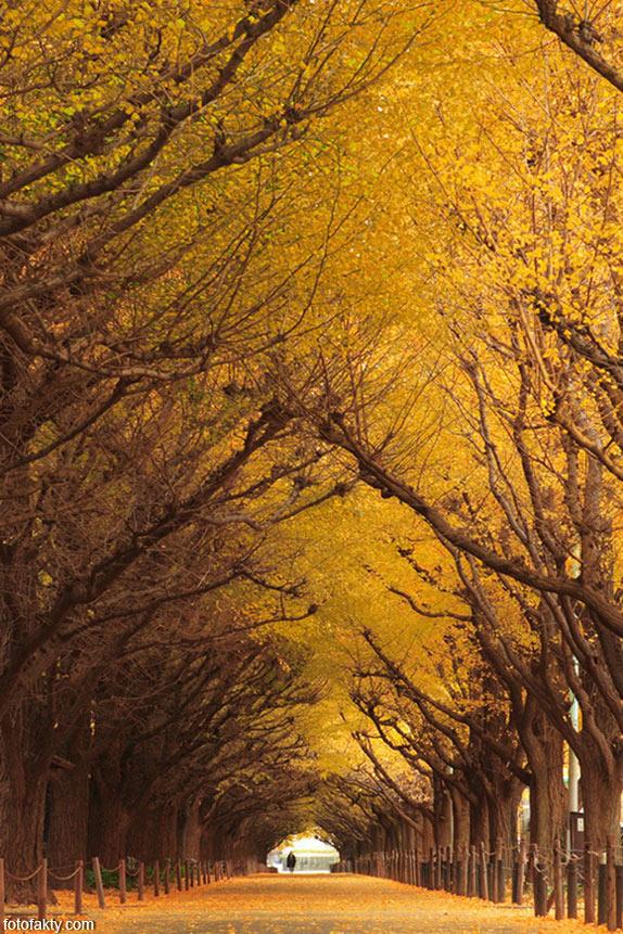 Самые красивые туннели из деревьев Фото 14