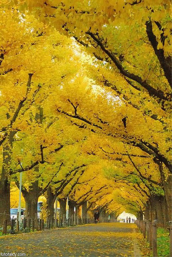 Самые красивые туннели из деревьев Фото 15
