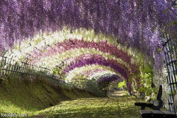 Самые красивые туннели из деревьев Фото 16