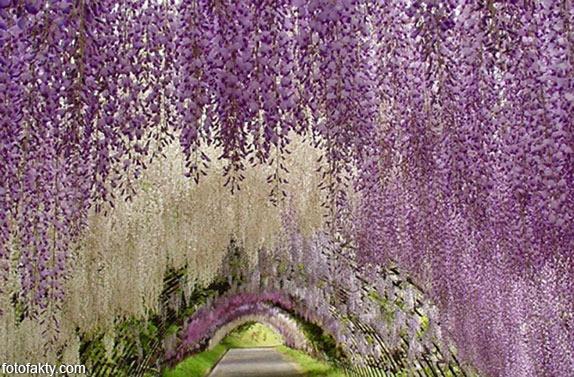 Самые красивые туннели из деревьев Фото 17