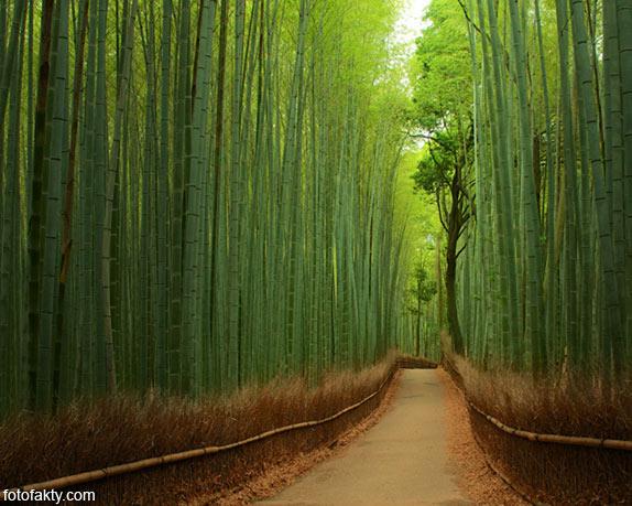 Самые красивые туннели из деревьев Фото 18