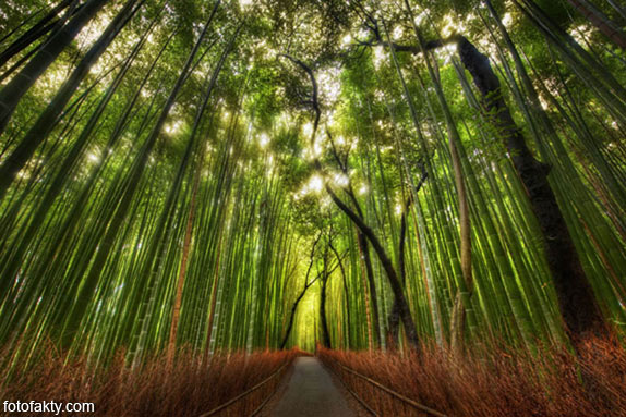 Самые красивые туннели из деревьев Фото 19