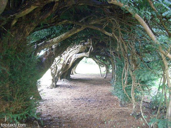 Самые красивые туннели из деревьев Фото 20