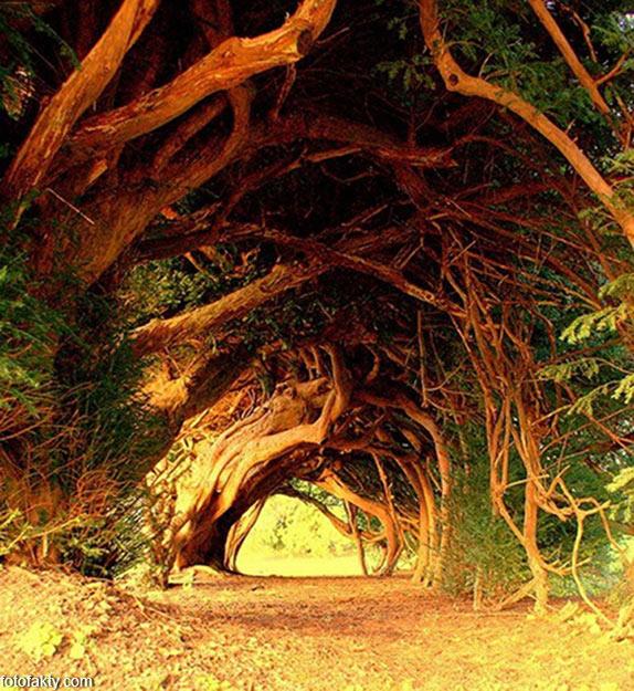 Самые красивые туннели из деревьев Фото 21