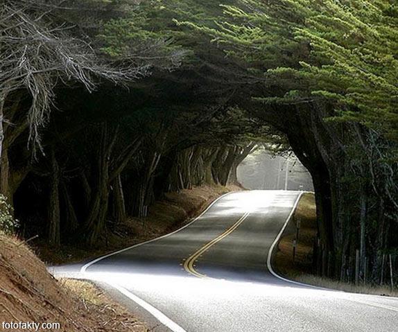 Самые красивые туннели из деревьев Фото 24