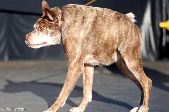 Самые уродливые собаки Фото 1