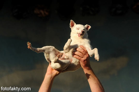 Самые уродливые собаки Фото 5