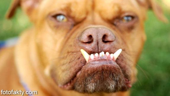 Самые уродливые собаки Фото 6