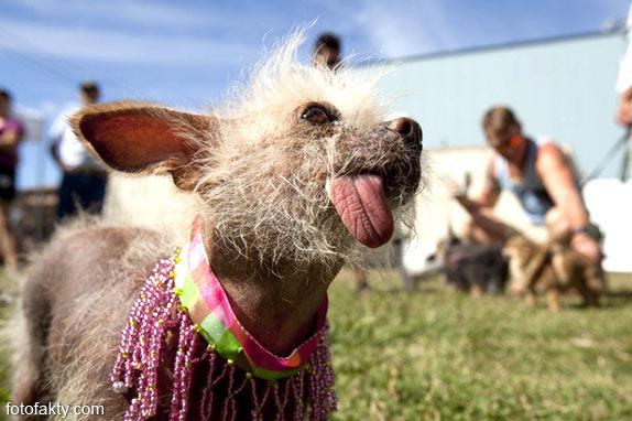 Самые уродливые собаки Фото 13
