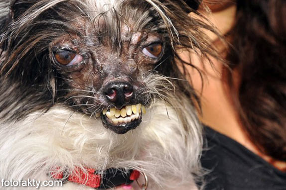 Самые уродливые собаки Фото 17