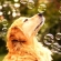 Чемп - самая счастливая собака в мире