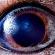 Макросъемка глаз животных