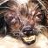 Самые уродливые собаки