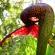 10 растений убийц